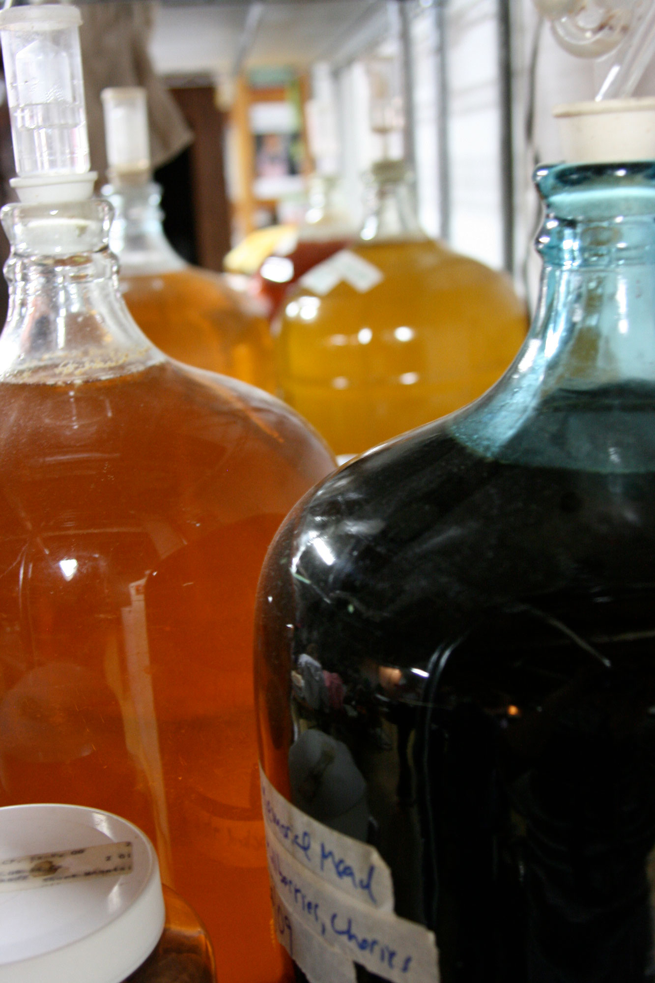 Carboys of fermenting mead