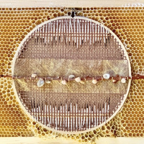 Embroidery hoop artwork with porcupine quill embedded in honeycomb