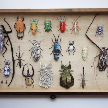 Kate Kato Insect Drawer